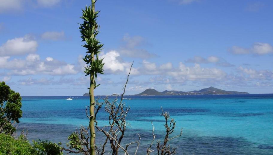 Tobago Cays depuis Baradal